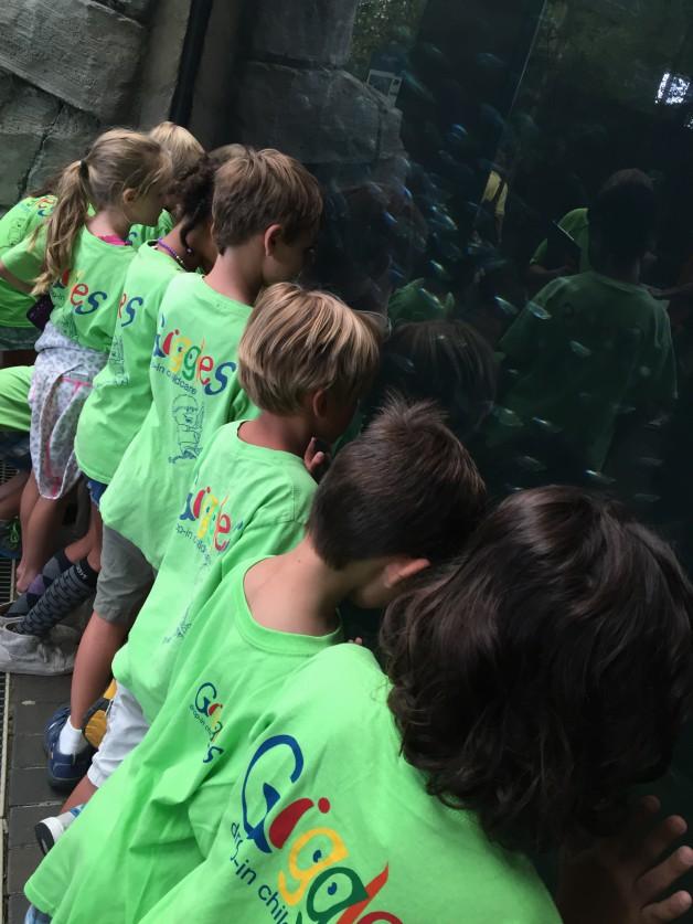 Kids looking in a fish tank